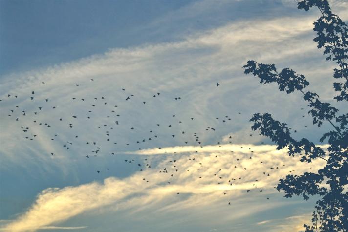 SKY & BIRDS